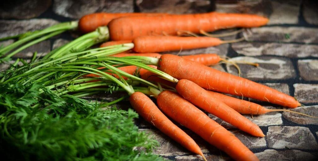 benefits of eating carrots during pregnancy