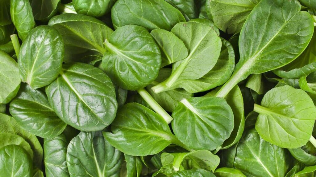 spinach during third trimester