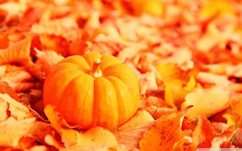 eating pumpkin during pregnancy